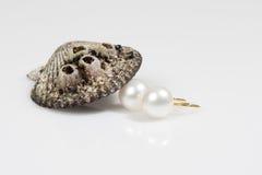 раковина перлы серьги Стоковые Фото