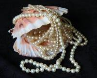 раковина перлы Стоковые Изображения