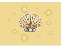 раковина перлы Стоковое Фото
