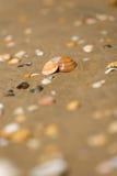 раковина песка пляжа влажная Стоковое фото RF
