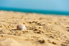 раковина песка пляжа влажная Стоковые Фотографии RF
