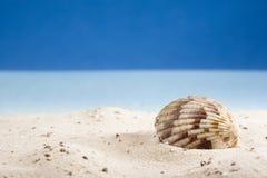 раковина песка пляжа лежа Стоковая Фотография