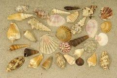 раковина песка собрания Стоковое Изображение