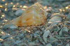раковина пляжа Стоковое Изображение RF