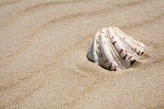 раковина пляжа Стоковые Изображения RF