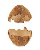 Раковина плодоовощ кокоса отрезанная в половине Стоковая Фотография