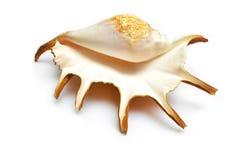 Раковина раковины Стоковая Фотография RF