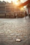 Раковина Сантьяго (раковина паломников) Стоковая Фотография RF