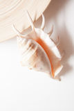 Раковина с бамбуковой плитой и белым космосом экземпляра Стоковая Фотография