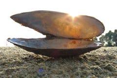 Раковина с солнечным лучом Стоковое фото RF