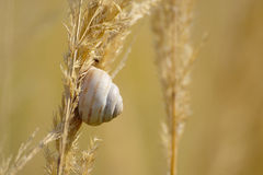 Раковина улитки на траве лета Стоковые Изображения