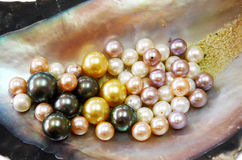 Раковина устрицы с жемчугами Мульти-цвета Стоковые Изображения RF
