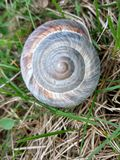 Раковина улитки в зеленом поле Стоковое Изображение RF