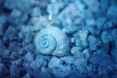 Раковина улитки под водой стоковое фото