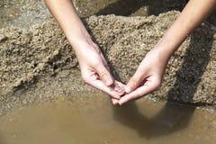Раковина уловленная пляжем малая Стоковое Фото