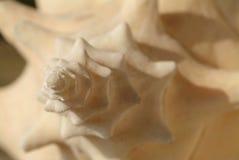 раковина ферзя детали раковины Стоковое фото RF