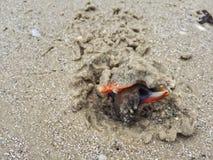 Раковина Флориды повышения воюя стоковое изображение