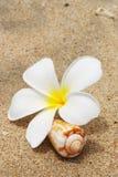 раковина цветка пляжа Стоковая Фотография RF