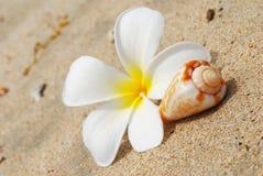 раковина цветка пляжа Стоковые Изображения