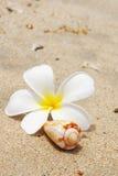 раковина цветка пляжа Стоковые Фотографии RF