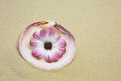 раковина цветка розовая Стоковые Изображения RF