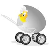 раковина цыпленка малая иллюстрация вектора