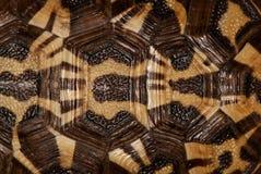Раковина черепахи, предпосылка Стоковое Изображение RF