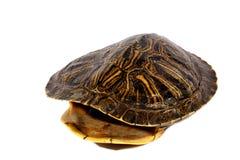 Раковина черепахи Стоковое Фото