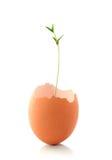 Раковина яичка с расти зеленого завода Стоковое Изображение RF