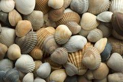 раковина 4 морей Стоковые Фотографии RF