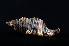 Раковина Стоковая Фотография RF