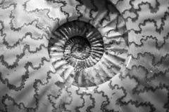 раковина Стоковая Фотография