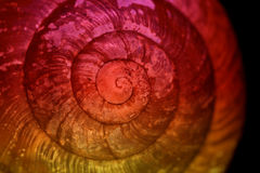 раковина Стоковое Изображение