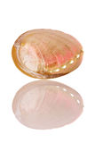 раковина abalone Стоковые Фотографии RF