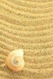 Раковина Gastropod стоковая фотография rf