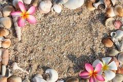 раковина leelawadee рамки цветка Стоковая Фотография RF