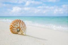 Раковина Nautilus на белом песке пляжа, против моря развевает Стоковые Изображения