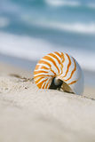 Раковина Nautilus на белом песке пляжа Флориды под светом солнца Стоковое Фото