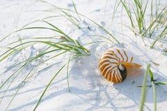 Раковина Nautilus на белом песке пляжа Флориды под светом солнца Стоковое Изображение