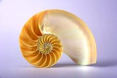 раковина nautilus Стоковые Фотографии RF