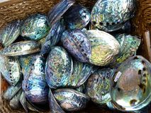 Раковина Paua, Новая Зеландия Стоковое Фото