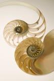 раковина sesectional nautilus перекрестной насечки Стоковые Фото