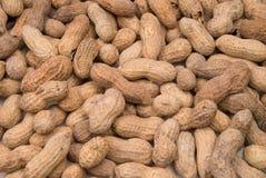 раковины арахисов Стоковые Изображения