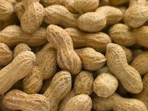 раковины арахисов стоковое изображение rf