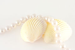 раковины веревочки перл Стоковая Фотография RF
