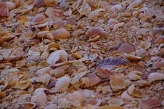 Раковины - вид спереди стоковые фото