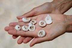Раковины в ладонях рук, острова Boracay, Филиппин Стоковые Фотографии RF