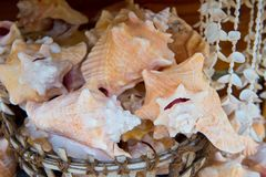 Раковины в корзине на деревянной предпосылке в Key West, США стоковые фотографии rf