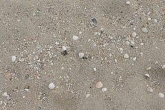 Раковины в песке на пляже в лете Стоковые Изображения RF