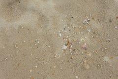 Раковины в песке на пляже в лете Стоковые Фото